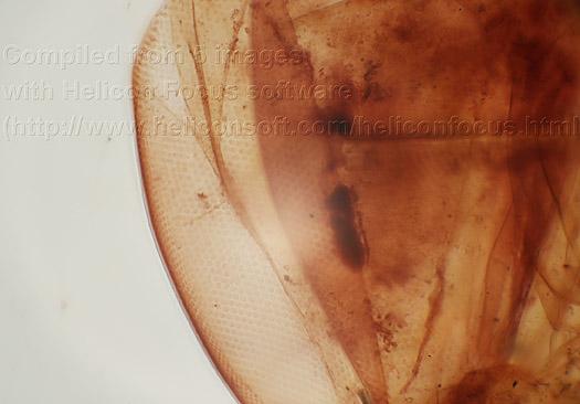 Mikroskop tpl xsp  bino